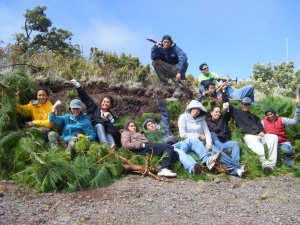 Volunteer group from Kamehameha Schools pulls invasive pines in Haleakala